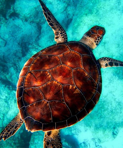 Plastik im Meer Schildkröte